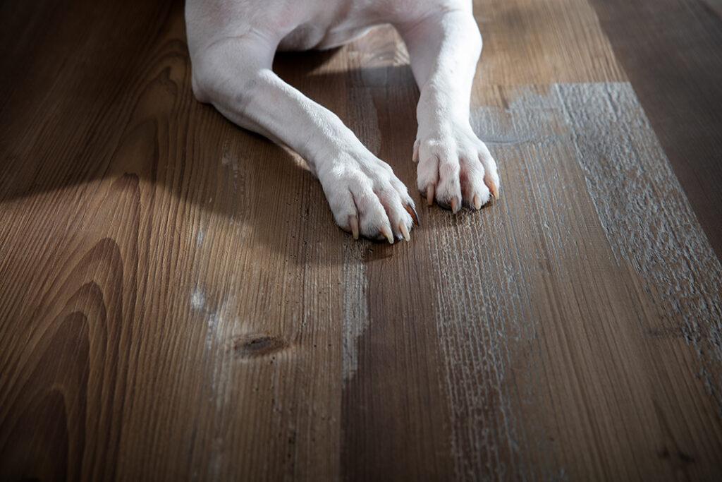 Pet Proof Flooring, Luxury Vinyl Flooring, CArpet, Hardwood